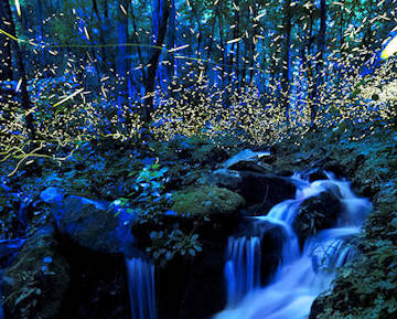 Fireflies Smoky Mountains