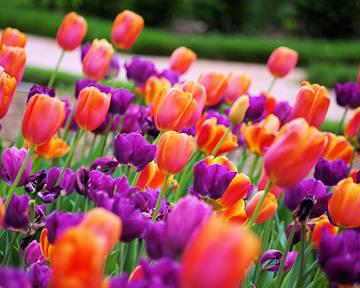 Spring Festivals Asheville