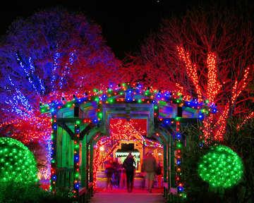 Winter Lights Asheville