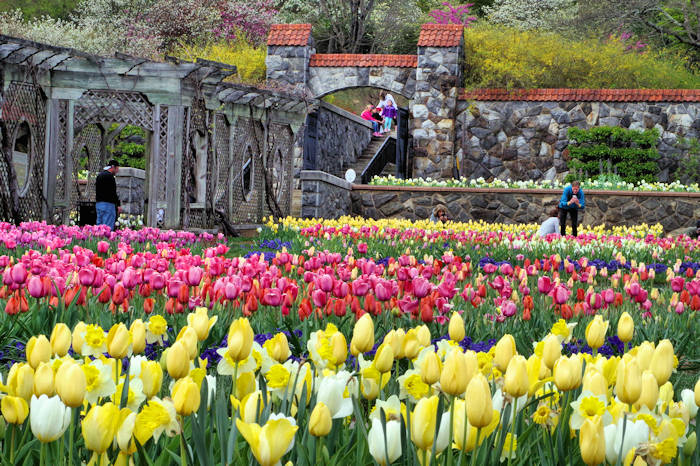 Biltmore Blooms Spring Flowers Guide