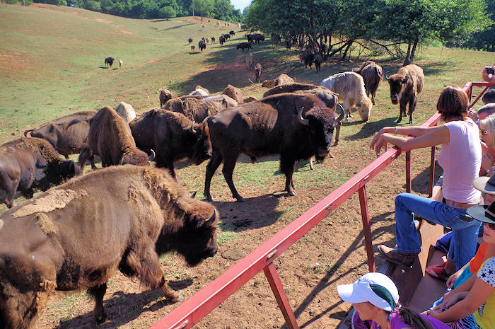 Asheville Bison Farm Tour