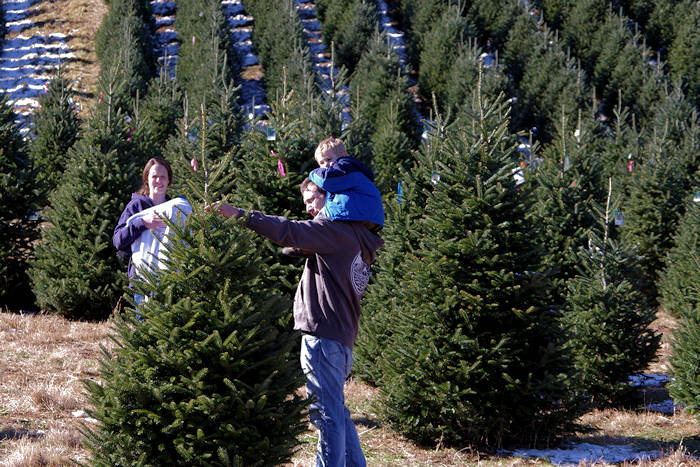 christmas tree farms near asheville