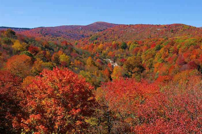 Fall Color Forecast