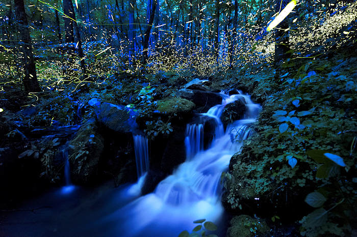 Fireflies in the NC Mountains
