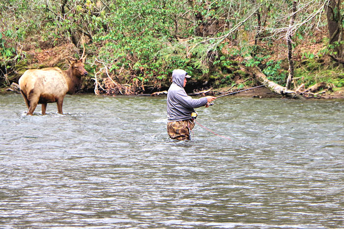Fly fishing in asheville nc mountains for Fly fishing cherokee nc