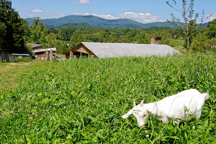 Hickory Nut Gap Farm, near Asheville