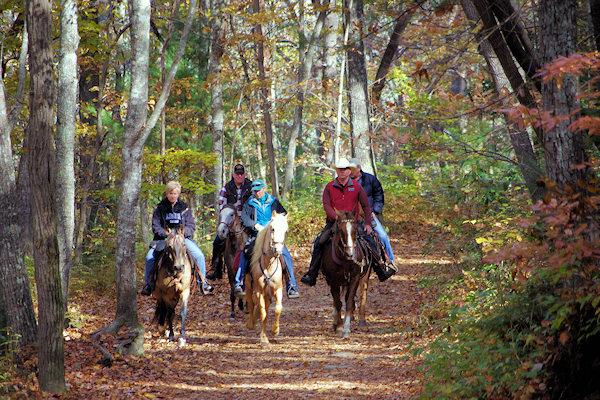 Asheville Horseback Riding