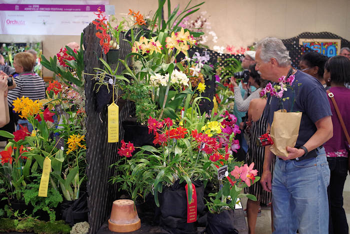 Asheville Orchid Festival