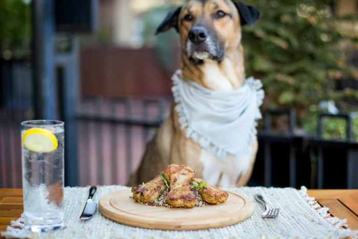 Dog Friendly Restaurants in Asheville