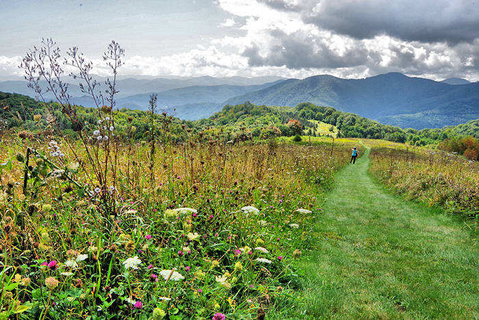 Purchase Knob, Great Smoky Mountains