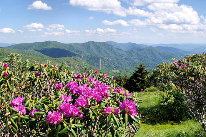Roan Mountain NC Appalachian Trail