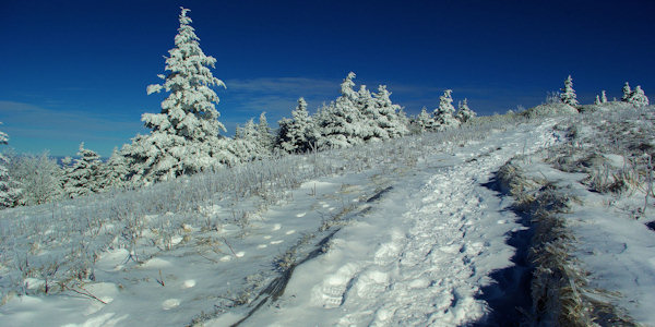 Appalachian Trail Snow Roan Mountain
