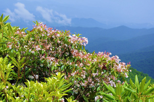Asheville Wildflowers
