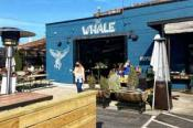 The Whale West Asheville