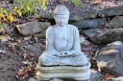 Mindfulness: Great Tree Zen Women's Temple