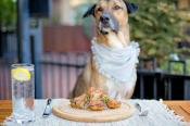Top Dog-Friendly Restaurants in Asheville