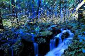 Fireflies Great Smoky Mountains