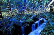 Fireflies Great Smoky Mountains