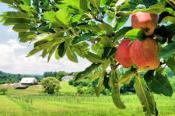 Hendersonville Cidery Tour