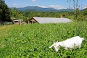 Hickory Nut Gap Farm