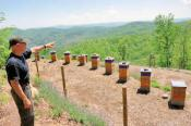 Killer Bees Honey Farm Tours
