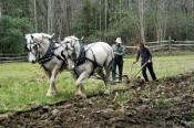 Plowing Days