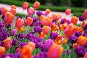 Spring in Asheville