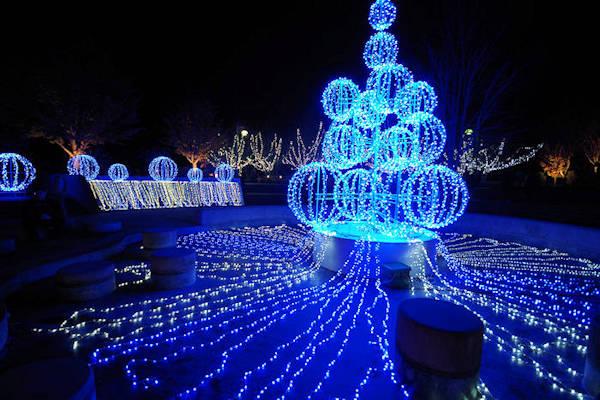 Nc Christmas Lights