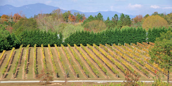 Tryon Foothills Wine Country