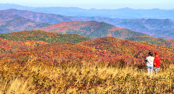 Black Balsam Knob, Fall Color
