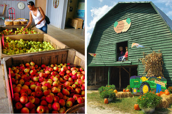 Apple Orchards in Hendersonville NC