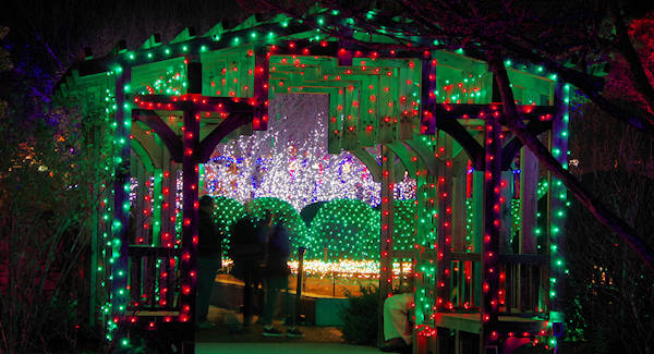 Winter Lights at NC Arboretum