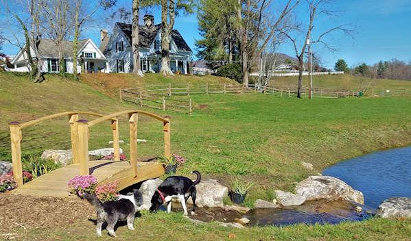 Dog Friendly Hotels Near Hendersonville Nc