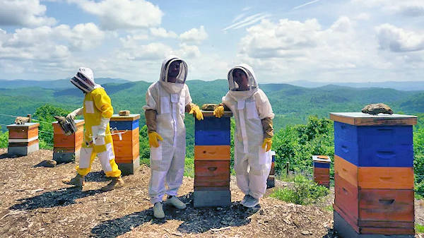 Bee Farm Tour, Lake Toxaway