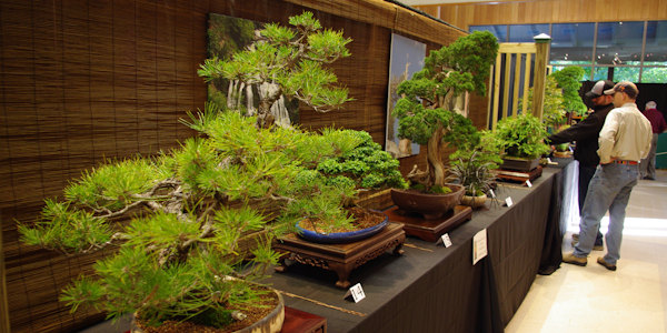 Bonsai at NC Arboretum