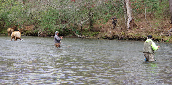 Cherokee Fishing