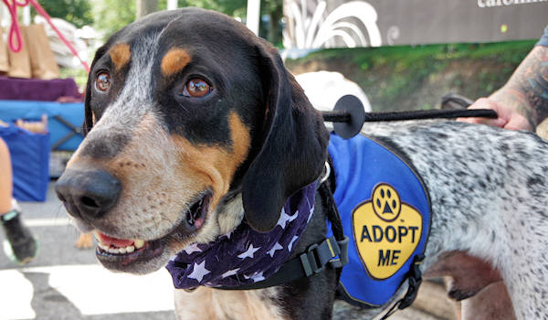 Coon Dog Day Adoption