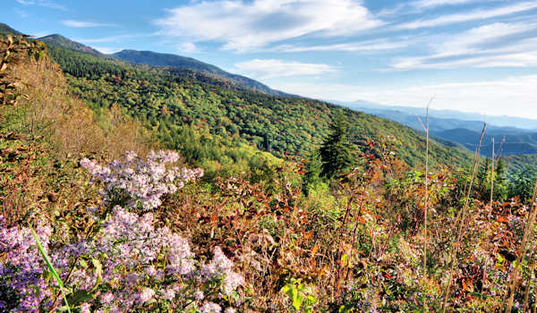 Fall Color Mt Mitchell