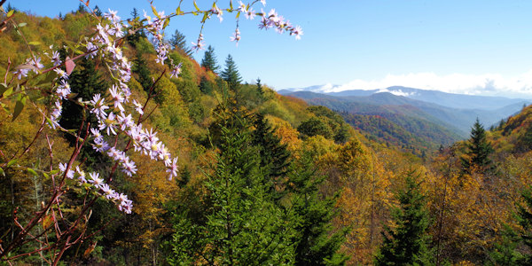 Fall Color in the Great Smoky Mountains