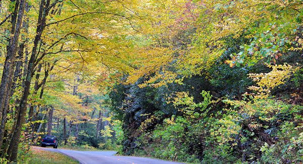 Forest Heritage Scenic Byway