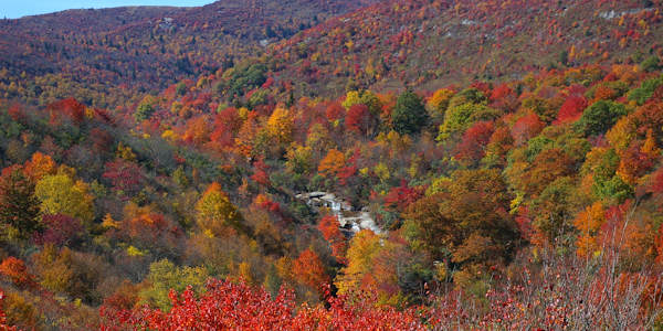 Graveyard Fields Fall Color
