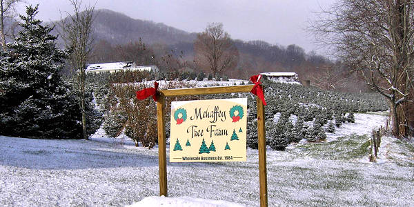 mehaffey tree farm - Christmas Tree Farming