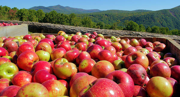 Orchard at Altapass, Blue Ridge Parkway