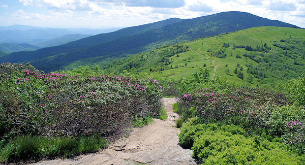 Roan Mountain - Jane Bald