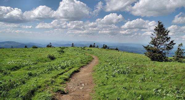 Roan Mountain Grassy Ridge