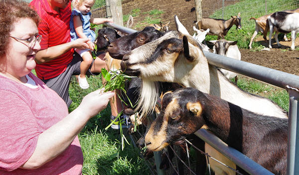 Round Mountain Creamery Goat Farm
