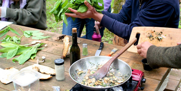 Wild Food Foraging Tours, Asheville