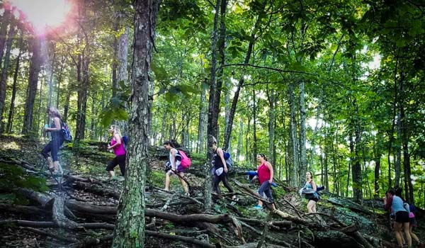Forest Bathing Hikes Asheville Wellness Tours